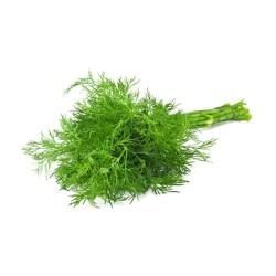 Βιολογικός Άνηθος Φρέσκος σε Ματσάκι Bio, Ελληνικός, Λαχανικά Greenhouse