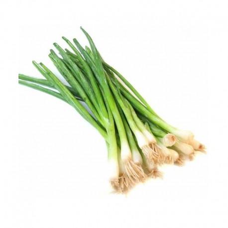Βιολογικό Κρεμμυδάκι Φρέσκο σε Ματσάκι Bio, Ελληνικό, Λαχανικά Greenhouse