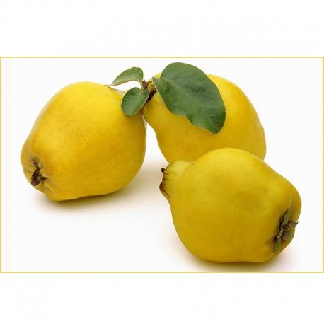 Βιολογικά Κυδώνια Bio, Ελληνικά, Φρούτα Greenhouse