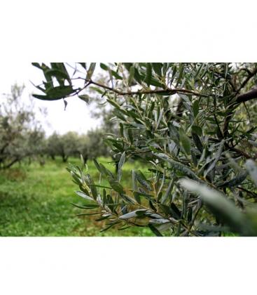 Ελιές Πράσινες Χαλκιδικής Βιολογικές Μαριναρισμένες 200gr Olea Tree