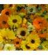 Καλέντουλα Βιολογικής Καλλιέργειας 20γρ Verum Herb