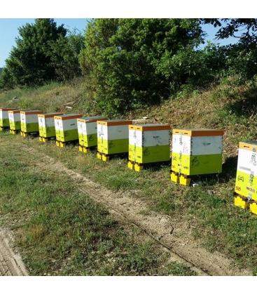 Βιολογικό Μέλι από Άγρια Βότανα Bio 940γρ., Ελληνικό, Μέλισσες οι Μάγισσες