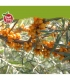 Ιπποφαές Χυμός Βιολογικός με Τσάι Βουνού & Μέλι200ml FeelBIO