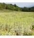 Βιολογικό Τσάι Ολύμπου 40γρ Bio Κτήμα Αλθαία