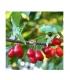 Βιολογικό Επάλειμμα από Κράνα Bio 220γρ Voras Natura