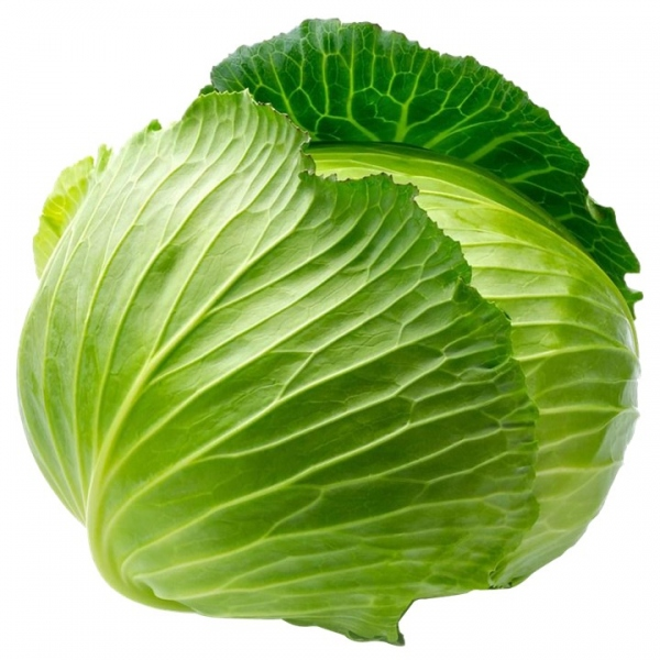 Βιολογικό Λάχανο Άσπρο Βιολογικής Καλλιέργειας Bio, Ελληνικό, Λαχανικά Greenhouse